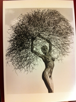 Bild von Postkarte - Neith with tumbleweed - Herb Ritts