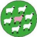 Button - Pink Sheep